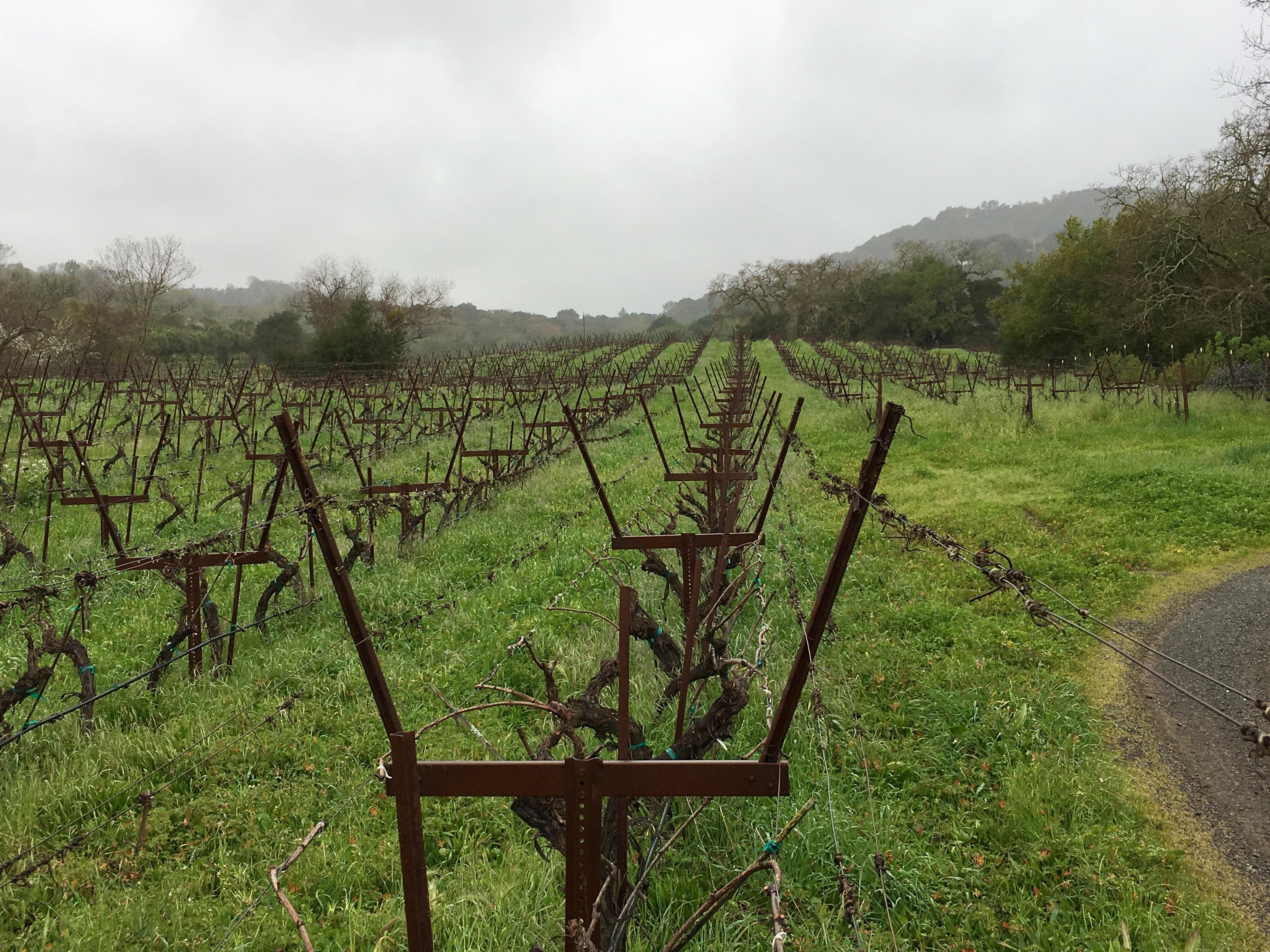 Harms Vineyard