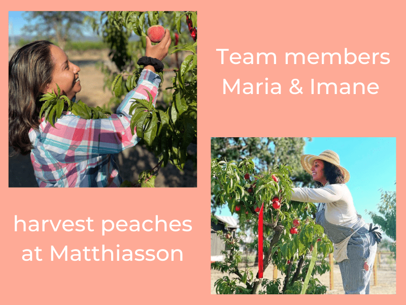 Maria and Imane harvest peaches at Matthiasson